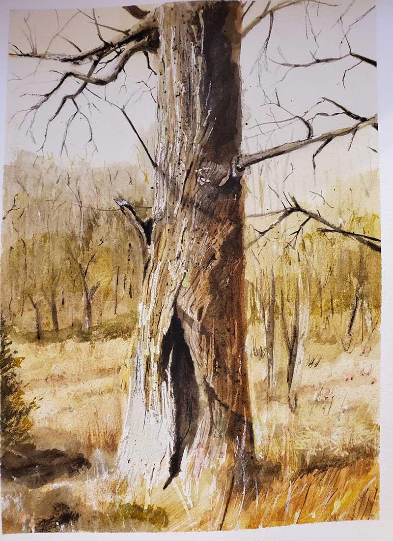 Wyeth's-Tree